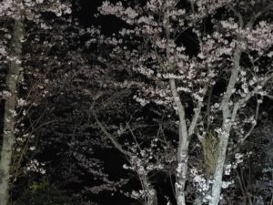 内子町知清公園