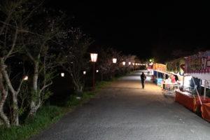 武丈公園夜桜