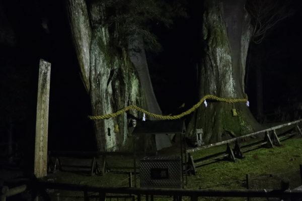 高知杉の大杉