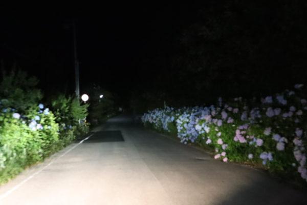 早明浦ダムへの道