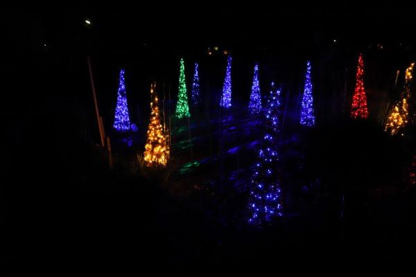 【高知】第7回 国分竹灯り憧憬の路6