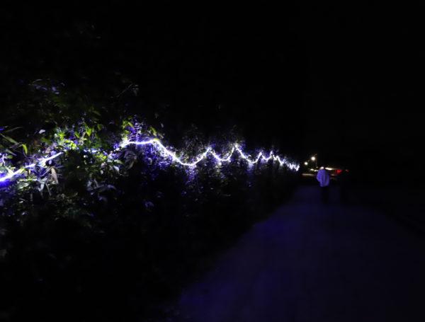 【高知】第7回 国分竹灯り憧憬の路2