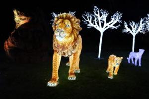 【愛媛】とべ動物園 ⑥ライオン舎前の高木付近