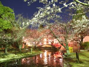 【香川】朝日山森林公園 夜桜2021